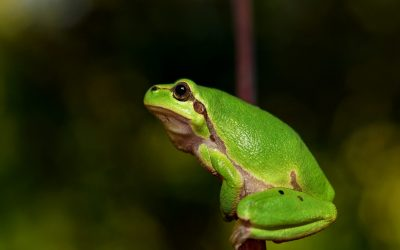 Is FEGLI boiling you alive? Lessons from the 'Boiling Frog' on making smarter insurance decisions.